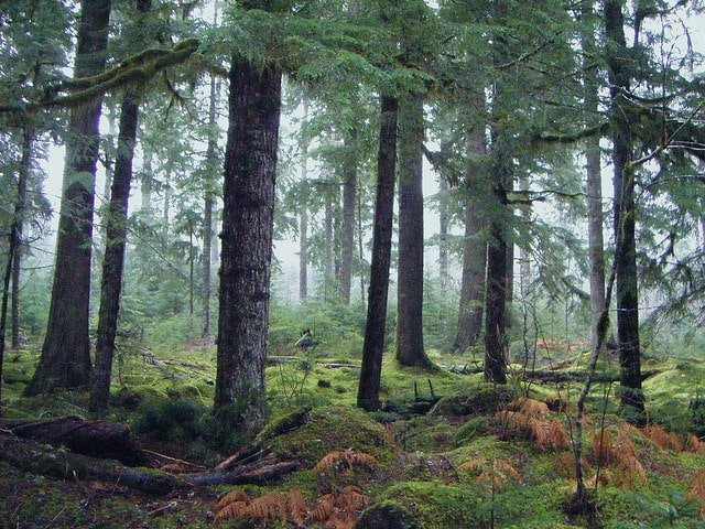 benefits of wilderness therapy