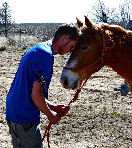 benefits of equine therapy